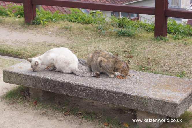 Cats of Onomichi