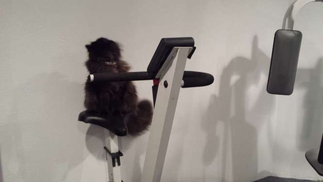gym-story-4