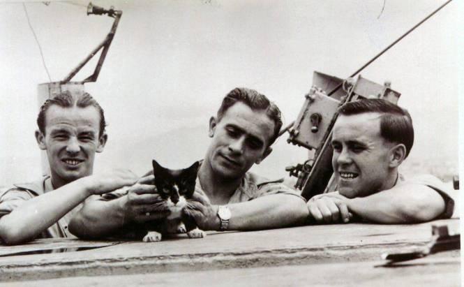 ASIp48 PDSA - Simon - ship's cat aboard HMS Amethyst  - who received the PDSA Dickin Medal