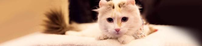 cat_slider2