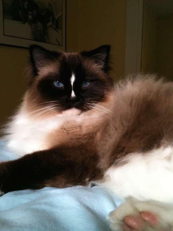 charlie on bed