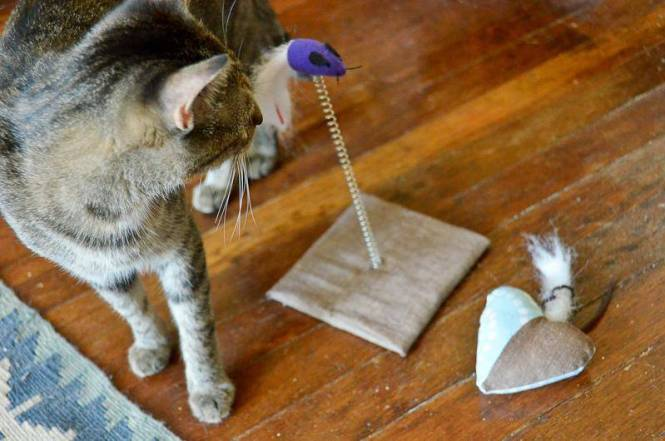 Does your cat need a toy-tervention.4