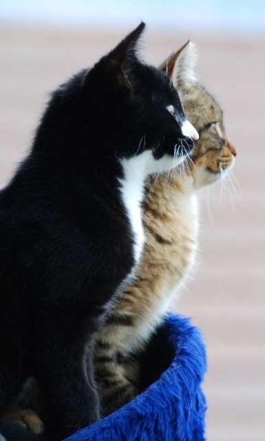 Should I get another cat or dog FOR KATZENWORLD_html_48d0e921-1