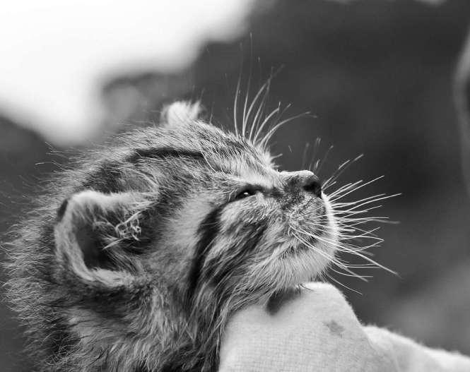 Should I get another cat or dog FOR KATZENWORLD_html_m529755d1-1
