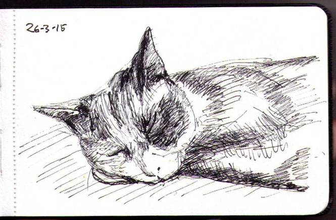 thomas-dalsgaard-clausen-2015-03-26a-oliver-the-cat-sleeping