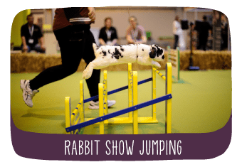 tv_rabbit_show_jumping