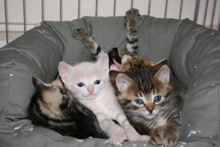 Image 5 kittens playing