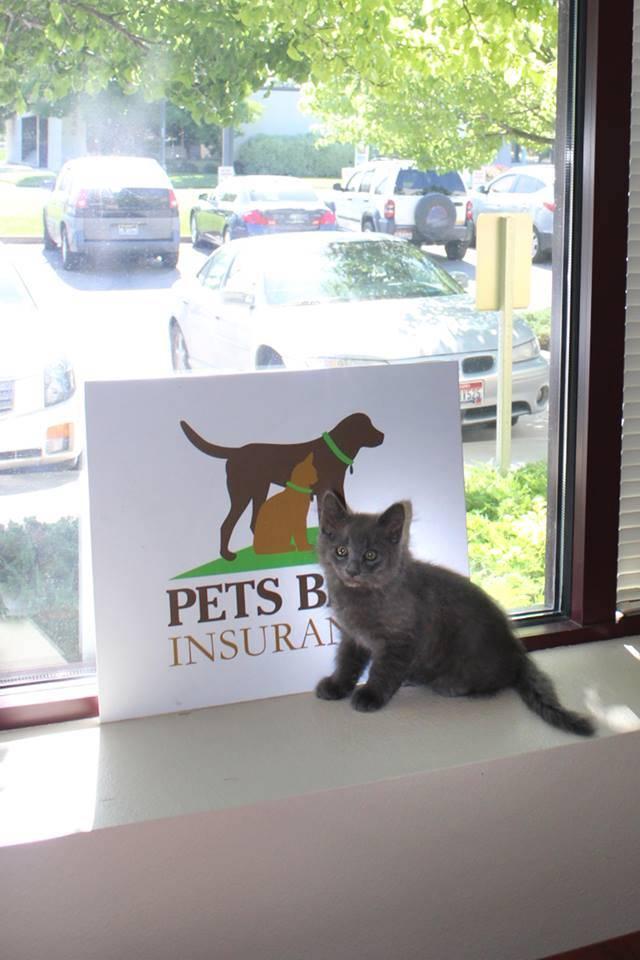 office-kitten-2014