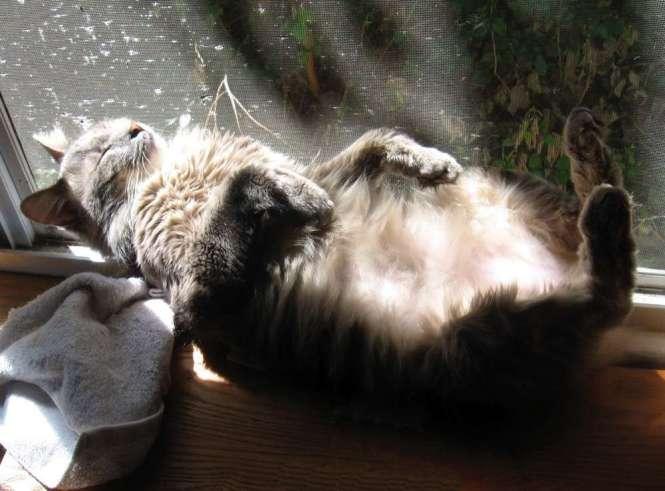 Misha sunny window 2
