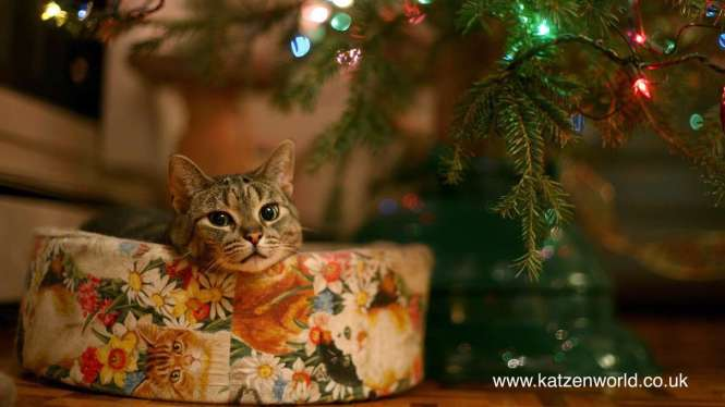cat_under_christmas_tree_1920x1080