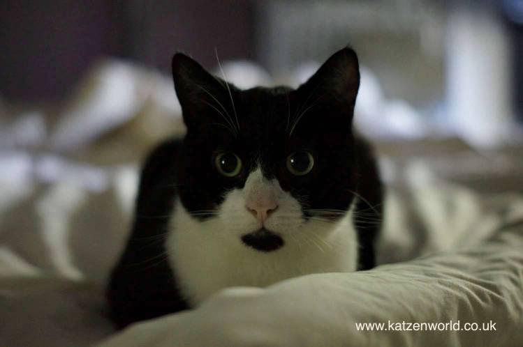 Oliver on bed