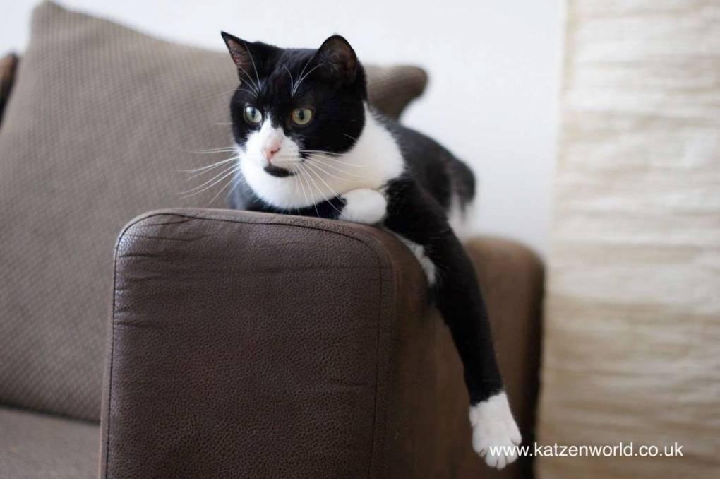 Oliver on sofa