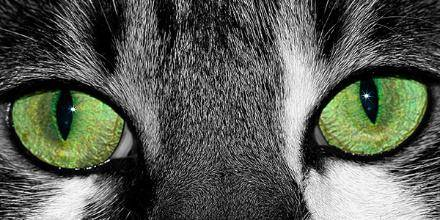 5 weird facts about cats that you probably didn't know 2.docx