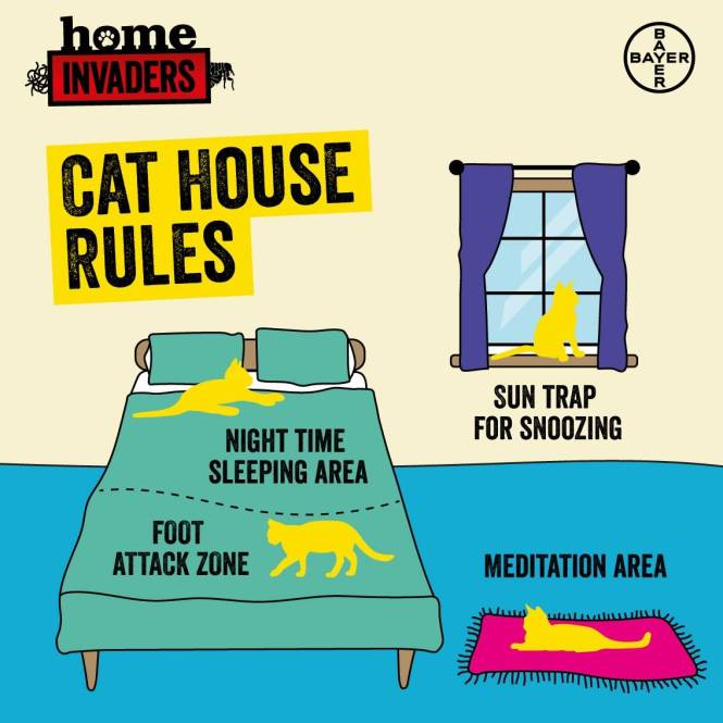 cat house rules graphic_bedroom