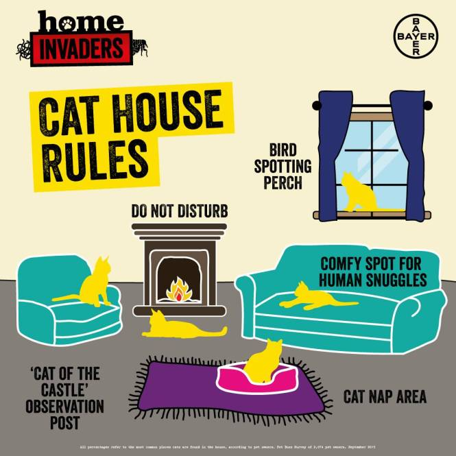 cat house rules graphic_lounge