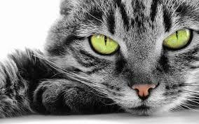 cat pic112
