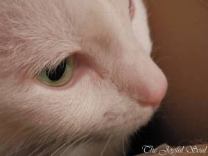 Lola Close-Up