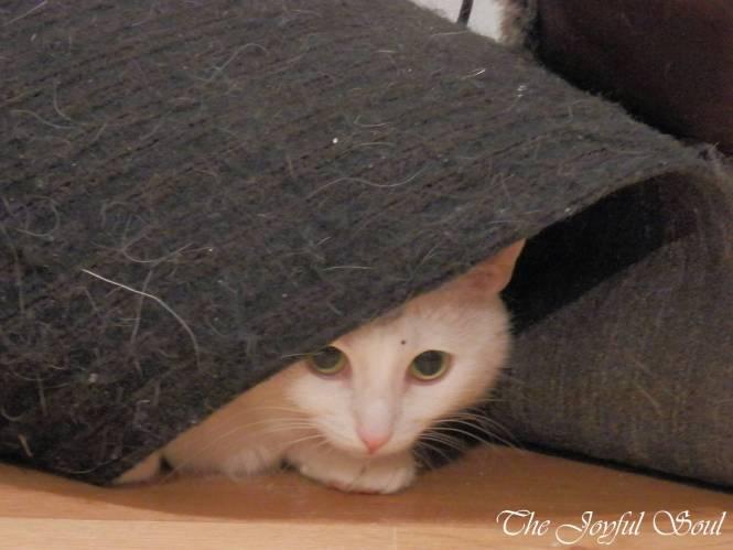 Lola under the mat 1