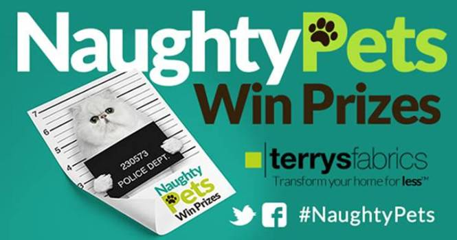 Terrys-naughty-pets-CAT banner