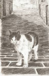 Pencil drawing of a cat on the streets of Italy.