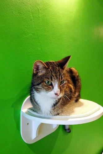 le chat touille 2