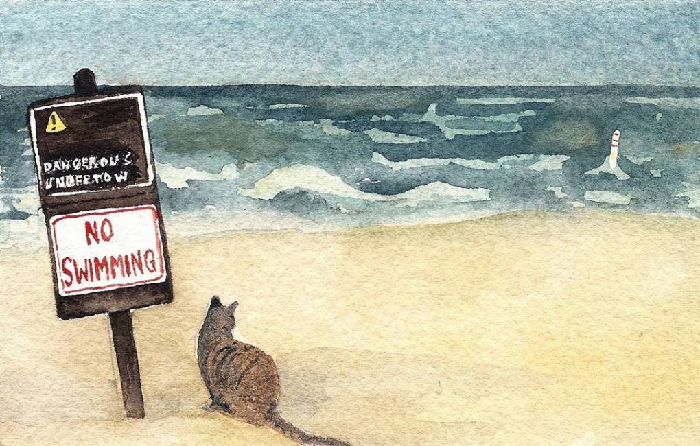 Cat at the beach with No Swimming sign