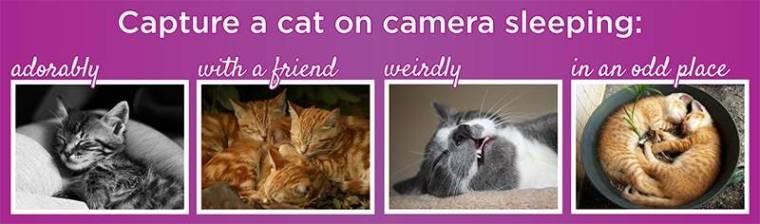capture a cat on camera sleeping