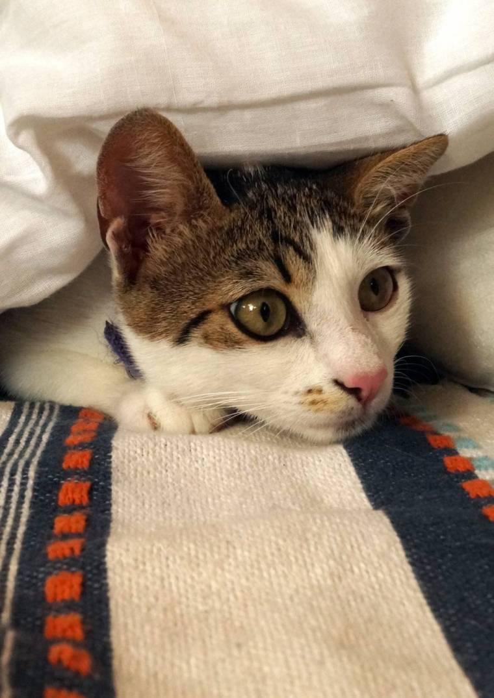 Artemis, the luckiest cat in Greece