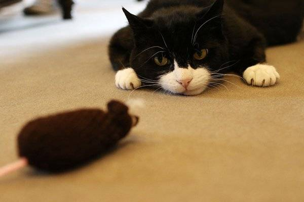 Palmerston with mouse toy
