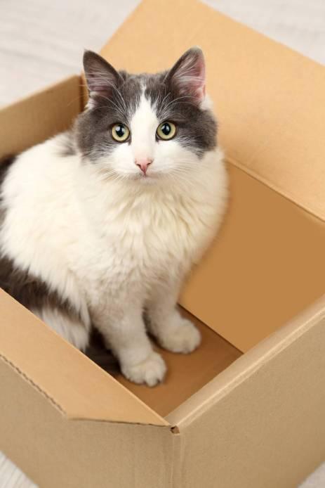 Cute cat sitting in cardboard box