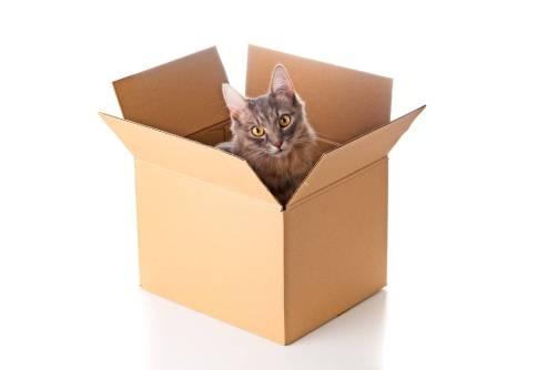 Adorable kitten in cardboard box
