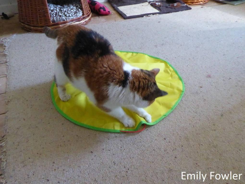 Jml Cat S Meow