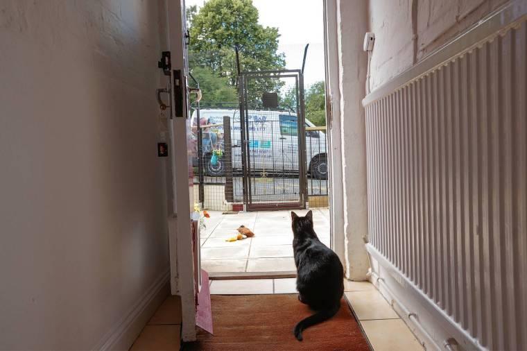 catio-protectapet-outdoor-to-indoor