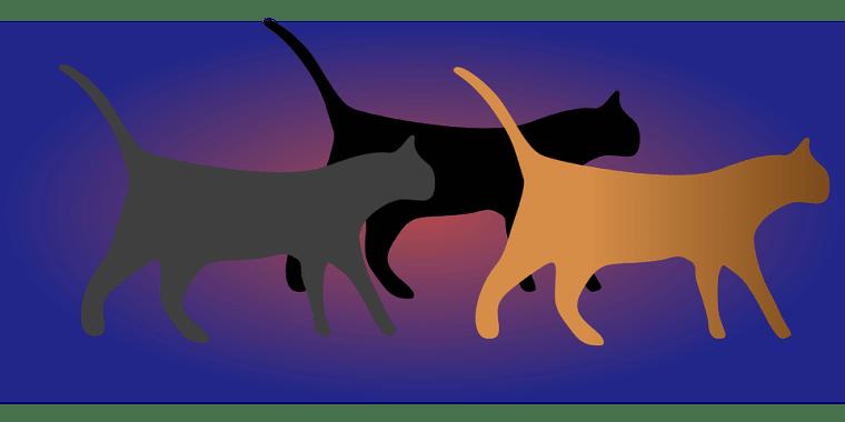 cats-303163_960_720