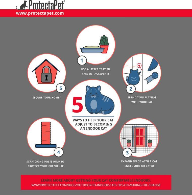 five-ways-to-help-your-cat-adjust-to-becoming-indoor