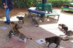 Malta - Sliema 1 - ©2016 Islands of Cats 2