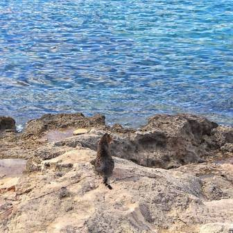 Malta - Sliema 2 - ©2016 Islands of Cats
