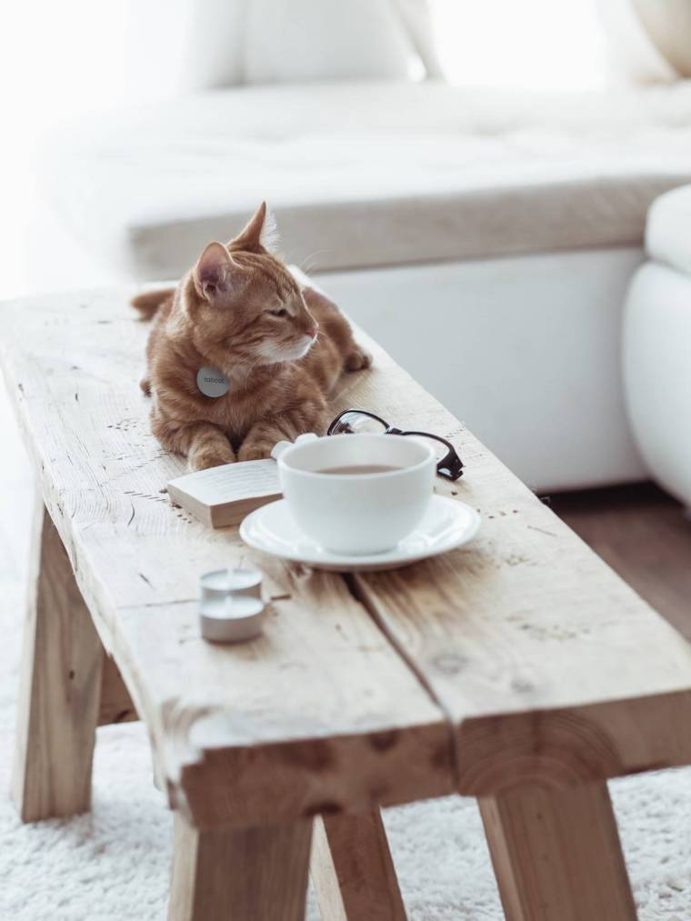 NEW Lifestyle Ginger Cat Grey