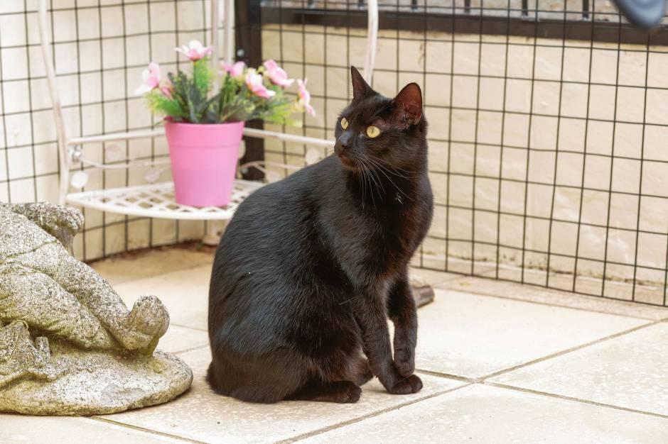 Making Indoor Outdoor Cat