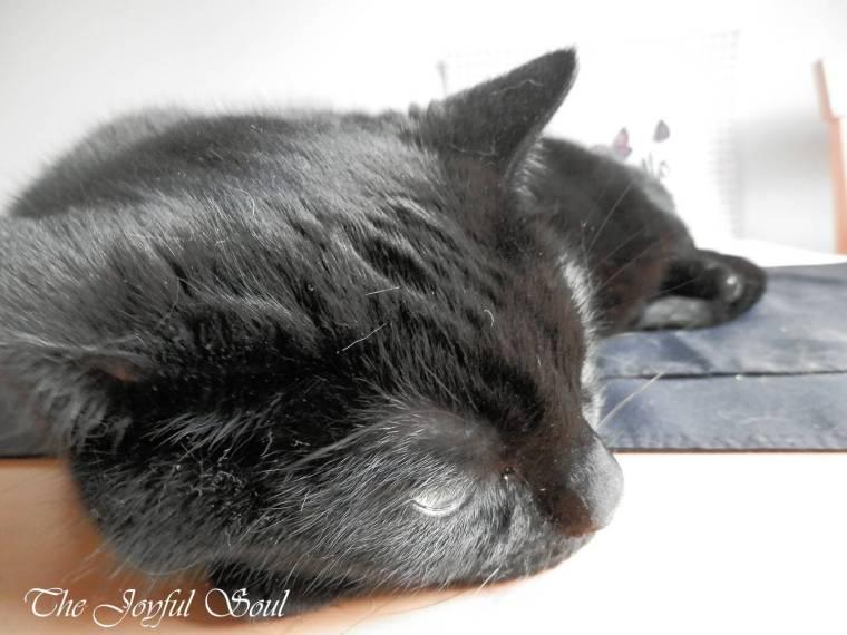 Sleepy Sampson 2