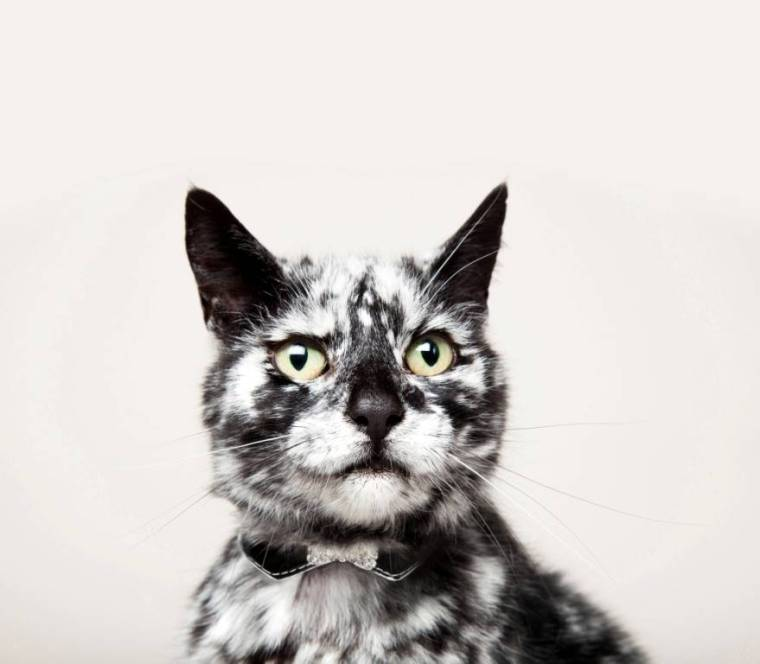 Scrappy the 18-year- old Face of Amazon Pets finalist with Vitiligo from West Yorkshire