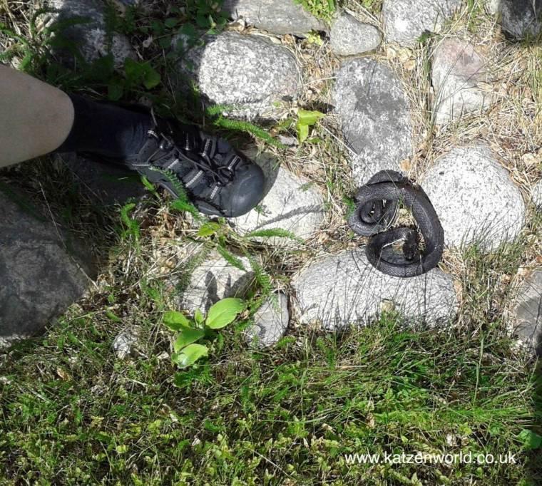 Grass snake in our garden.