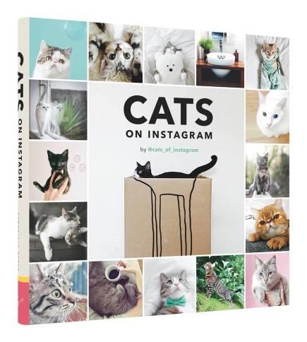 cats of instagram 2