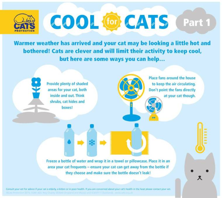 Cool_for_Cats_pt01