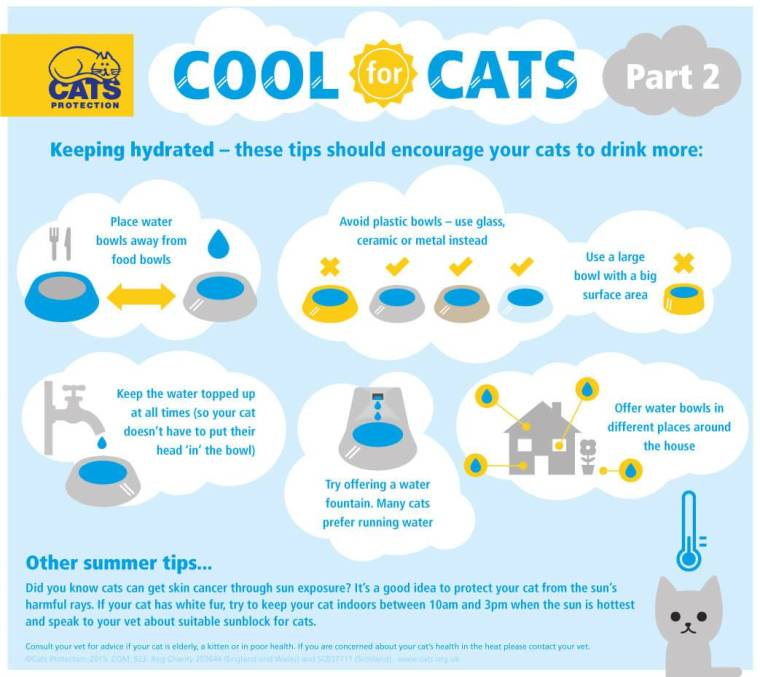 Cool_for_Cats_pt02