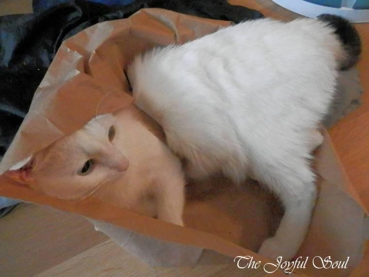 A Bag of Cat 3