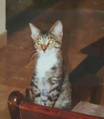 Ratso 1995