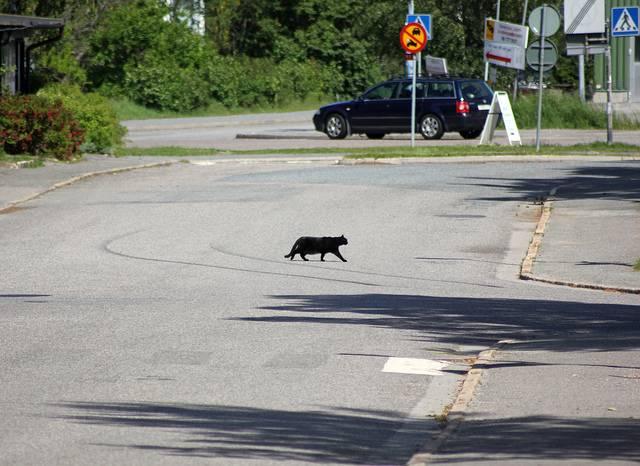 black cats post 4