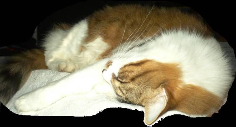 phantom-cat (1)