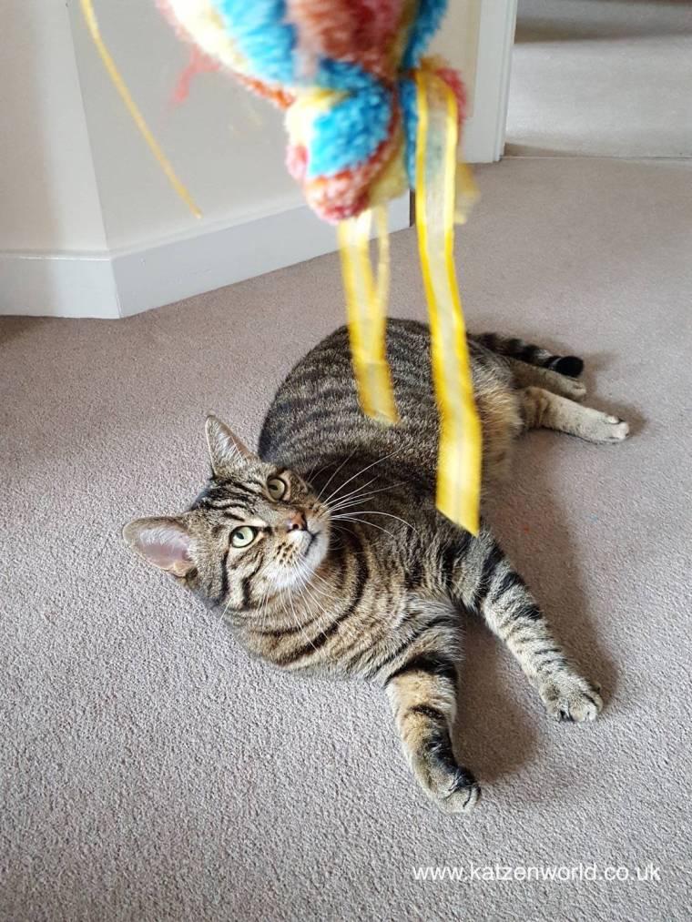 cat-candy-1